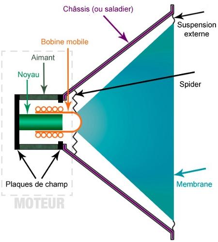 Coupe d'un haut-parleur : on peut y voir les différents éléments qui le constituent